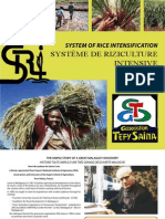System of Rice Intensification - Henri de Laulanie de Sainte-Cro