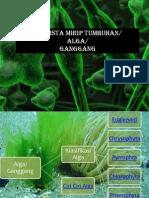 Ganggang (2).pdf