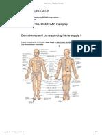 Anatomy _ Pgmee Uploads