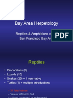 bay area reptiles15