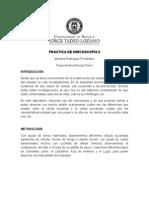 Informe Practica de Mircoscopía II