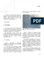 7Linfat.pdf