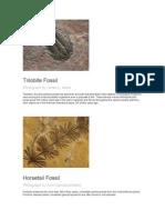 Album de Fosiles