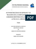 tesis ACTIVIDAD BIOLÓGICA DE ESPONJAS Y SU RELACIÓN CON LA COMPLEJIDAD DE LA COMUNIDAD BENTÓNICA EN LA BAHÍA DE LA PAZ, B.C.S., MÉXICO.