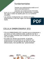 Conceptos Fundamentales Embrion Humano