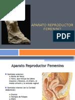 2.- Aparato Reproductor Femenino 3ra unidad.ppt