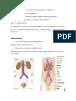 cuestionario fisiologia.docx