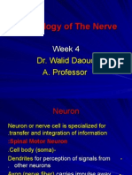 Nerve Physiology I Week 4