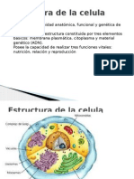 Estructura de La Celula