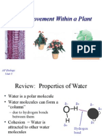 Water Movement Within a Plant