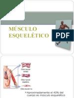 contraccion_musculo_esqueletico