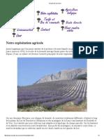 Lavande de Provence