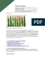 Jardinería - Carencias de Nutrientes Minerales