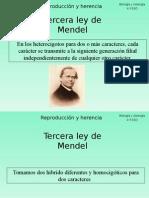 tercera-ley-de-mendel-1207159887263432-8