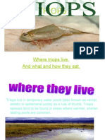 Where Triops Live. and What and How