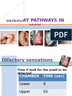 Exercise 3 Sensory Functions