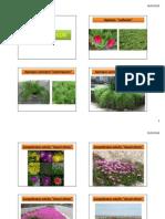Plantas de Xerojardinería - Clima Árido -Poco Mantenimiento
