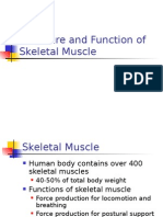 Structure Skeletal Muscle
