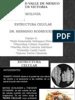 2.1 Estructura Celular