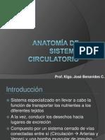 Anatomía de Sistema Circulatorio