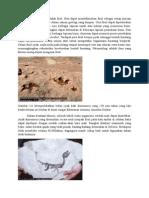 Bukti Evolusi Yang Lain Adalah Fosil Lk