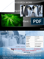 Emperor Penguin and Cannabis Plant Presentation