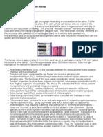 anatomy_retina.pdf