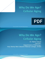 cellular aging 2