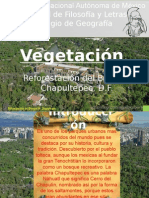 Vegetacion Del Bosque de Chapultepec