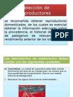 Selección de reproductores.pptx