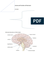 Structure and Function of the Brain Notes