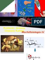 Pancreas Endocrino