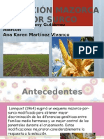 Expo_seleccion Mazorca x Surco