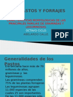 caracteristicas morfologicas de los pastos del ecuador