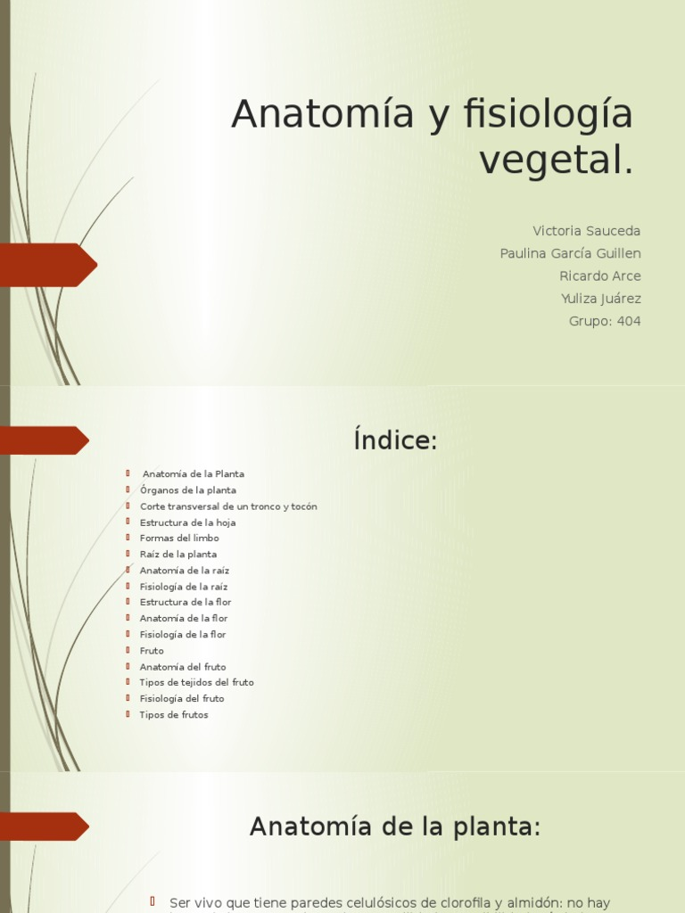 Increíble Maneras Divertidas De Aprender Anatomía Y Fisiología ...