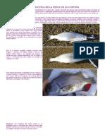 Guía Practica de La Pesca de La