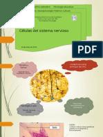 Celulas Del Sistema Nervioso Neuropsicologia Historico Cultural