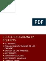 ECOCARDIOGRAMA EQUINOS