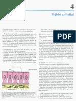 Cap 04-Tejido Epitelial