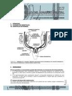 Guías de Embriología 2013 __ Desarrollo Del Aparato Genital Guias de Lectura 2013