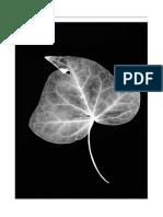 Hidden_Root.pdf
