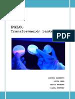 PGLO (m5)