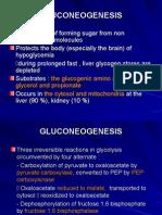 K-7 Glukoneogenesis Carbohydrate Metabolism (2) - Copy