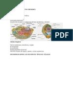 Células de Distintos Orígenes
