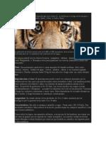 El Tigre de Bengala.docx