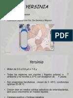 Yersinia PDF