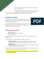 Anabolisme Et Catabolisme Du Glycogène