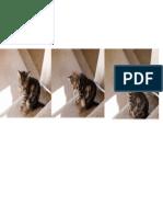 Sterling Cat