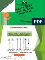 Plasticidad Neuronal y Músculos