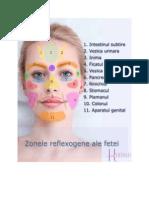 Zonele Reflexogene Pe Chip